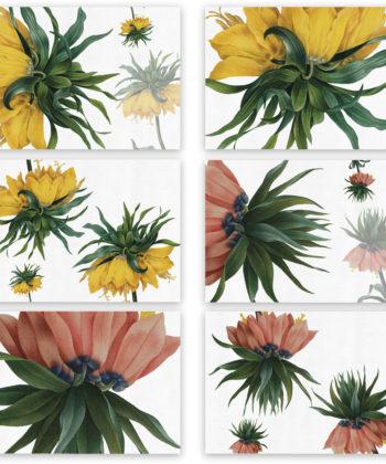 """Set di 6 tovagliette e tovaglioli """"Fritillaria"""""""